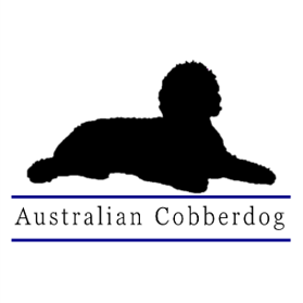 Official Home of the Australian Cobberdog